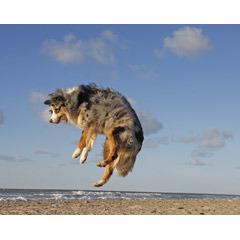 犬 03.jpg