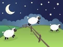 羊が一匹.jpg